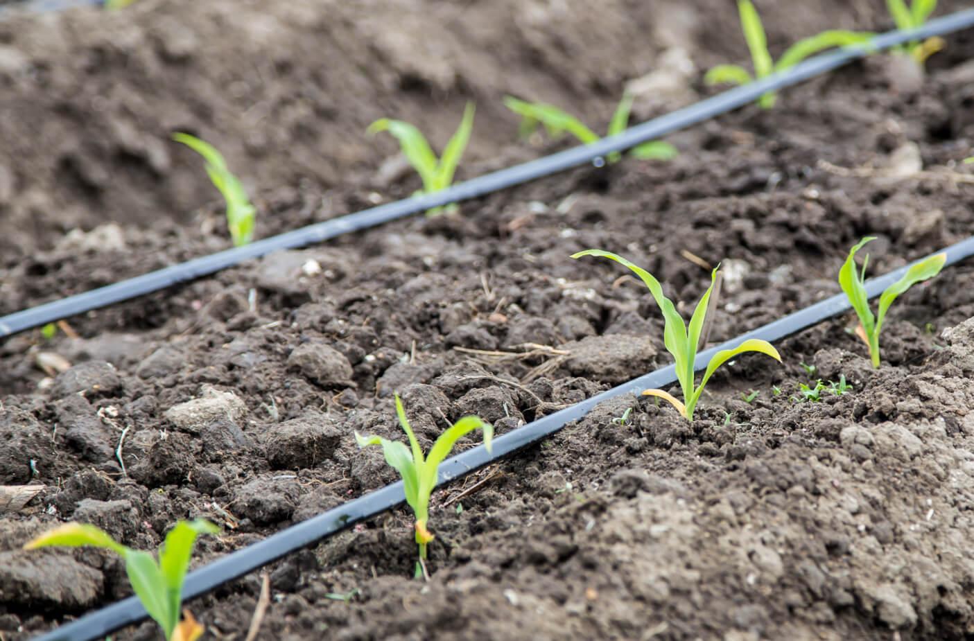 Agricultura: la clave para lograr un consumo eficiente de agua