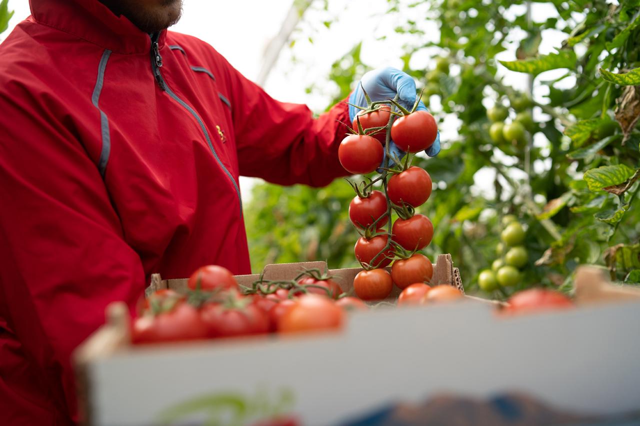 https://treze.es/wp-content/uploads/2021/08/biosabor-tomate-1.jpg